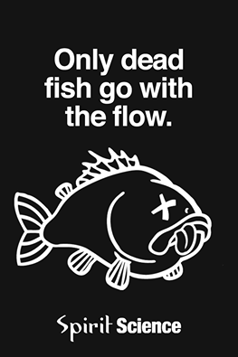 A quote of the pragmatic programmer quotesaga for Only dead fish go with the flow